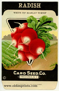 Radish (white tipped scarlet turnip)