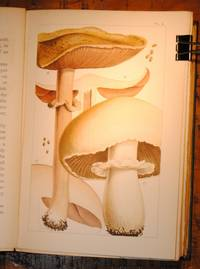 British Edible Fungi. How to distinguish and how to cook them. With coloured figures of upwards of 40 species by M C Cooke - 1st Edition - 1891 - from E C Books and Biblio.com