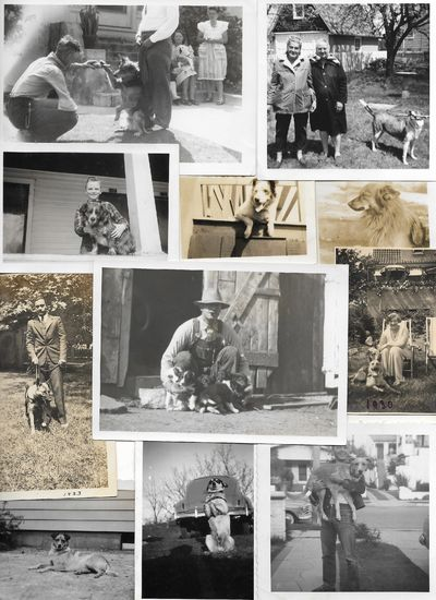 A fascinating and entertaining assemblage of photographs featuring dogs of all sizes and varieties. ...