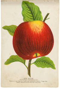 [A tree-peddler's sample book containing a large collection of colour fruit and botanical specimen plates]