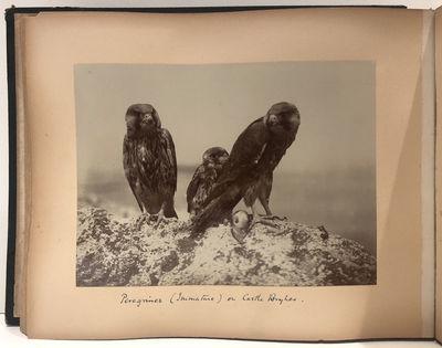 Naturalist Album of Albumen, Bromide,...