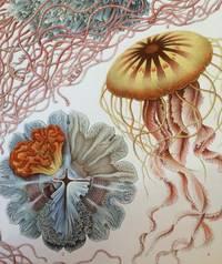 Kunst-Formen der Natur.; Art Forms in Nature