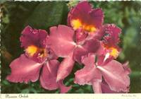 Hawaiian Orchids 1969 unused Postcard