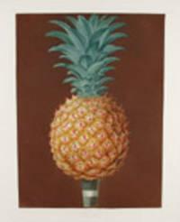 [Pineapple] Jagged Leaf Black Antigua