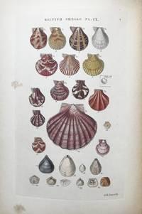 Illustrated Index of British Shells