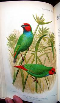 THE AVICULTURAL MAGAZINE, BEING THE JOURNAL OF THE AVICULTURAL SOCIETY FOR THE STUDY OF FOREIGN AND BRITISH BIRDS IN FREEDOM AND CAPTIVITY