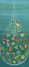 View Image 6 of 10 for The Giant Golden Book of Biology. An Introduction to the Science of Life Inventory #1002513