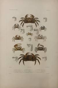 Crustaces PL.6