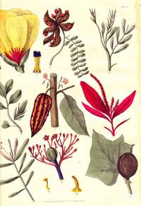 Sketches towards a Hortus Botanicus Americanus; or,. New and Valuable Plants of the West Indies and North and South America.