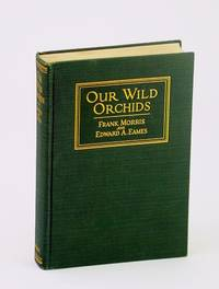 Our wild orchids: Trails and portraits