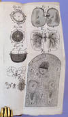 View Image 2 of 5 for The anatomy of vegetables begun. HFN copy Inventory #42936