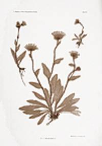 Vienna: Hof- und Staatsdruckerei, 1856. 'Nature printed' in brown ink, with titling and imprint in b...