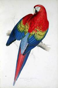 Illustrations of the Family of Psittacidae, or Parrots
