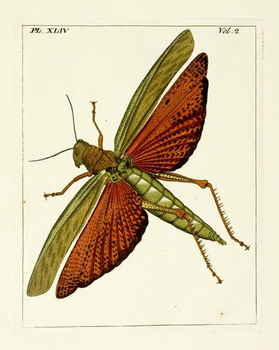 Illustrations of natural history....