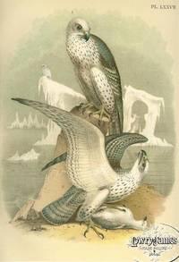 Plate LXXVII Jer-falcon or Gyr Falcon.