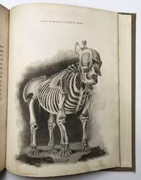 A Series of Engravings representing the Bones of the Human Skeleton