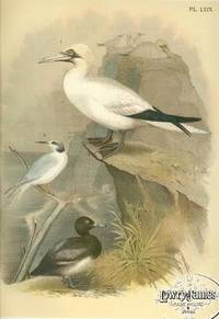 Plate LXIX Common Gannet, Havell\'s Tern, Greater Scaup Duck