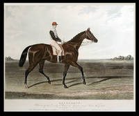 Kingcraft. Winner of the Derby Stakes at Epsom 1870... By King Tom out of Woodcraft. The Property of Lord Falmouth - Trained by Matthew Dawson - Ridden by T. French