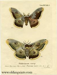 Phalaenarum europ