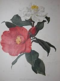 London: W. Robinson, 1903 - 1905. First Edition. Half Vellum, Cloth Boards. Very Good. Complete run ...