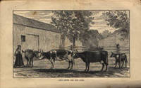 Abby Smith and Her Cows, with a report of the law case decided contrary to law