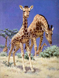 A Group of Giraffes by  Edward  (1900-1981) Osmond - Signed - from Alan Wofsy Fine Arts (SKU: 16-3141)