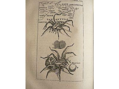 Folio Engraving We Have Won Praise From Customers 77-1704 Columna Cochlis. Coins Bartoli