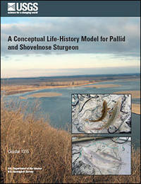 A conceptual life-history model for pallid and shovelnose sturgeon