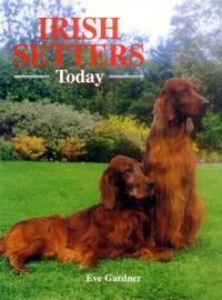 Irish Setters Today