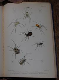 BRITISH SPIDERS An Introduction to the Study of the Araneidae of Great Britain and Ireland
