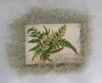 image of Christmas card with fringe