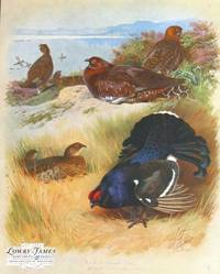 British Birds. Plate #55: Red Grouse (male & female), Black Grouse (male & female).
