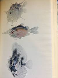 image of The Arcturus Adventure. An Account of the New York Zoological Society's First Oceanographic Expedition