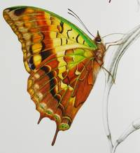 A PASSION FOR BUTTERFLIES [standard edition]