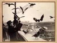 L'homme aux pigeons.