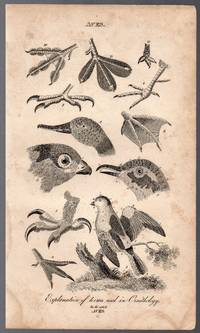 image of An Original 1821 Ornithology Engraving of Various Birds from the British  Encyclopedia : or Dictionary of Arts and Sciences by Nicholson, William  (1753-1815)