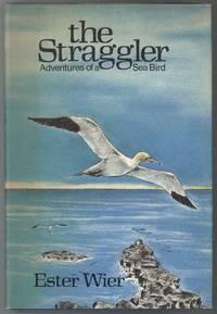 image of THE STRAGGLER Adventures of a Sea Bird