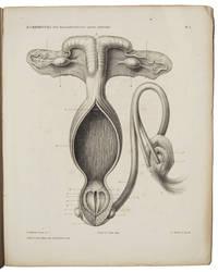 OVER HERMAPHRODITUS SPURIUS FEMINUS