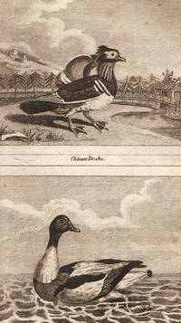 Natural History of Birds, Fish, Insects and Reptiles. Embellished with upwards of two hundred engravings