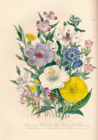 The Ladies Flower-Garden of Ornamental Annuals by  Mrs Jane C Loudon - Hardcover - Second Edition - [1850] - from Barter Books Ltd (SKU: lou16)