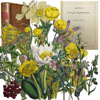 British Wild Flowers by  Mrs Jane C Loudon - Hardcover - Second Edition - 1848 - from Barter Books Ltd and Biblio.com