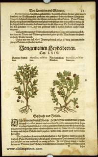 Myrtillus, vel Vitis Idaea. Myrtillus, vel Vitis Idaea rubra