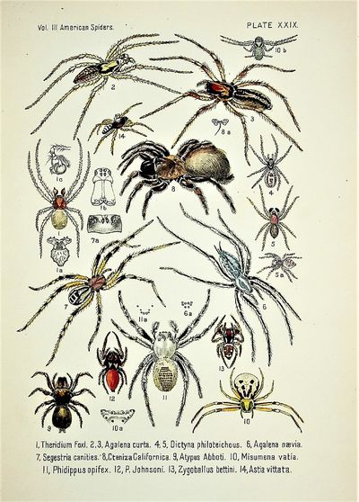 American Spiders and Their...