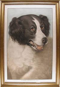 A Famous Newfoundland Dog