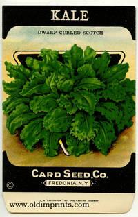 Kale.  Dwarf Curled Scotch