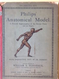 Philips' Anatomical Model - A pictorial representation of the human frame and its organs.