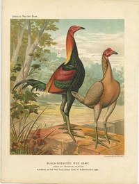 Black-Breasted Red Game. Bred by Captain Heaton. Winners of the Two Challenge Cups at Birmingham, 1886