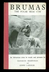 image of BRUMAS THE POLAR BEAR CUB.