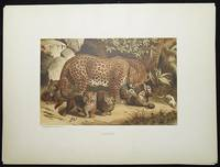 image of Leopard [chromolithograph printed by L. Prang & Co.]