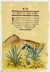 Tequila: El Vuelo del Mezcal Azul por el Paisaje Agavero Patromonio Mundial UNESCO